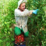 Maraichage en agriculture paysanne, Cran Gevrier, Annecy
